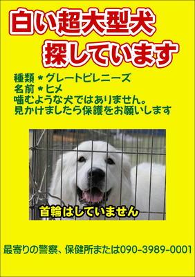 E38392E383A1-thumbnail2迷子犬ヒメ