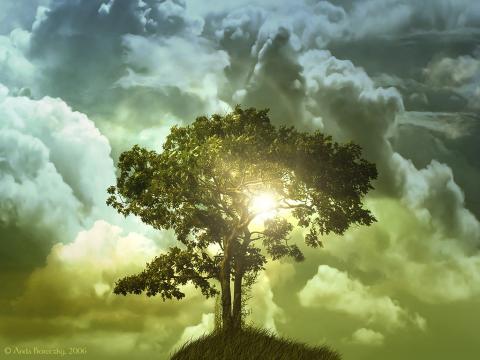 the-tree-of-life_convert_20120311060247.jpg