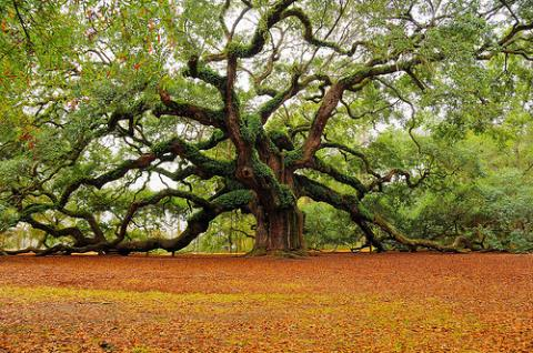 tree+of+life+from+flickr_convert_20120311055252.jpg