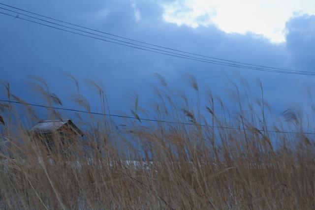 20110120 冬4_R