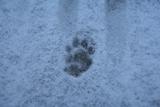 20110125 雪の足跡1_R