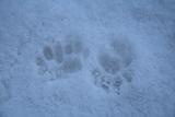 20110125 雪の足跡2_R
