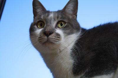 20110203 窓辺に猫1