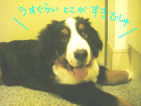 gokidayo.jpg