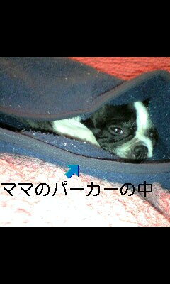081115_2012~0001-0001-0001
