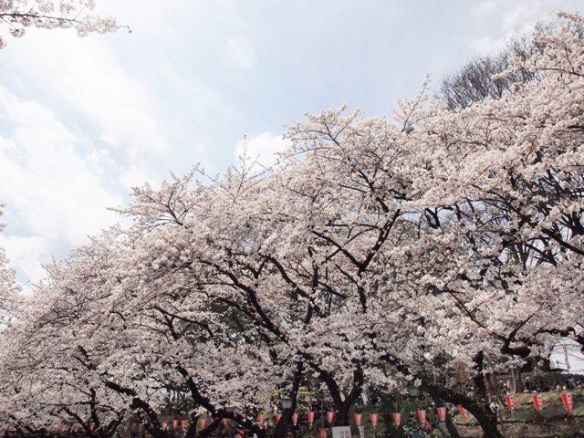 上野公園17