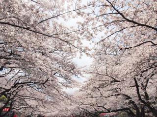 上野公園14