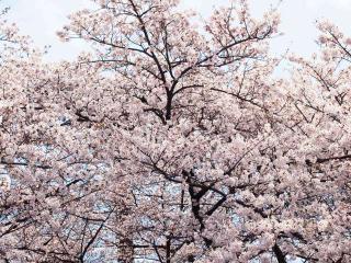 上野公園09