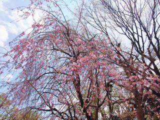上野公園28