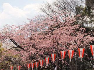 上野公園23