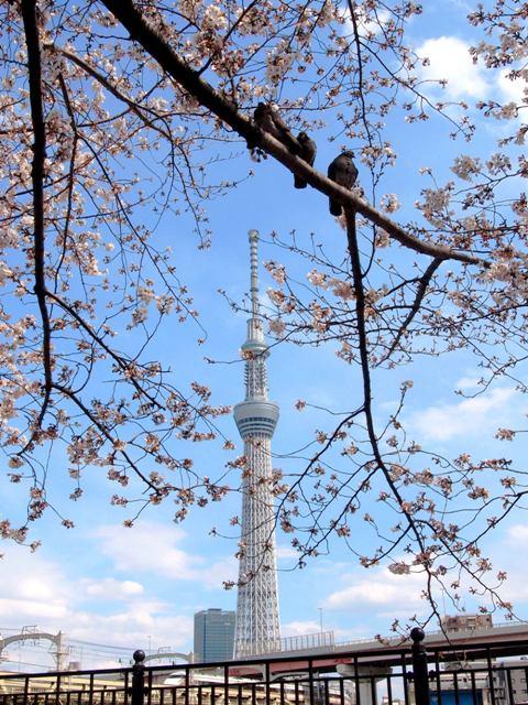 東京スカイツリー34