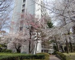 文学部と桜