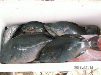 鮎釣り怪獣グレ2