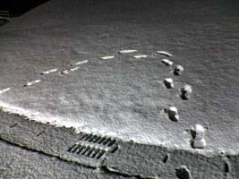 snow310026-1.jpg