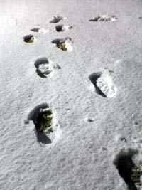 snow310028-1.jpg