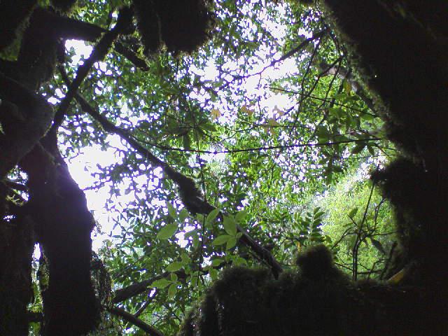 木の中から・・・