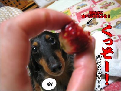 むっちゃんっ!!!そんなんじゃもうこのイチゴあげないよっ!!!