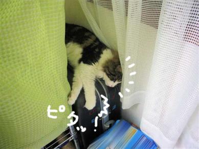 P1070746_R.jpg