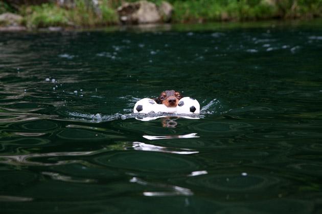 goeswim.jpg