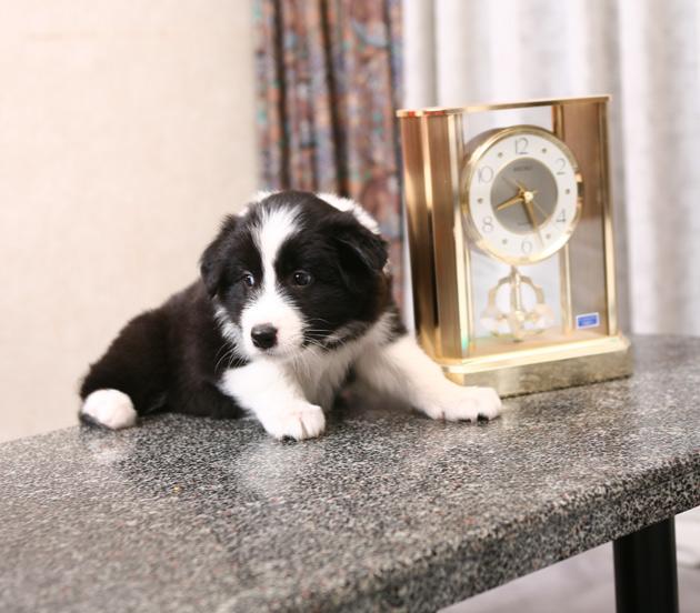 puppyclock.jpg