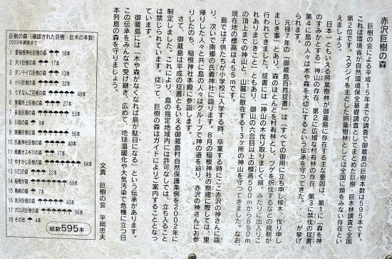 1997年南郷で日野正幸氏が日本一のスダジイ(幹周り13.79m)を発見しました