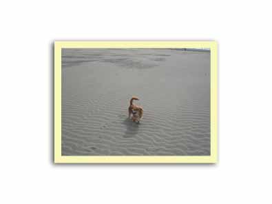 大洗海岸 066のコピー