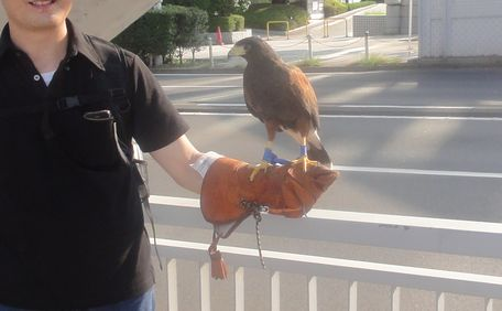 ご主人は鷹
