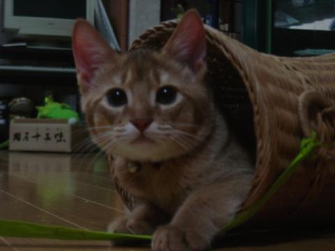 仔にゃんジョゼ(2007.12.13)