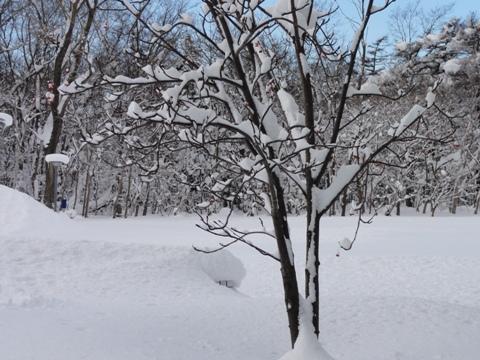 雪景色(2011.01.11)