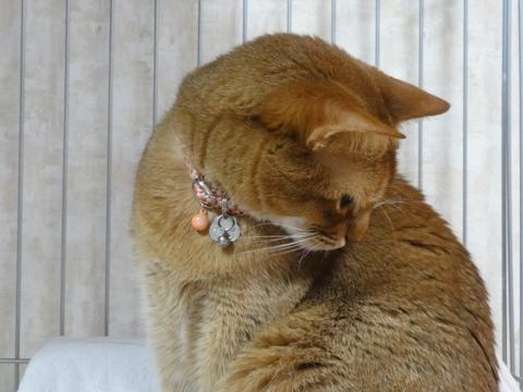 控え目なジョゼ嬢02(2011.01.24)