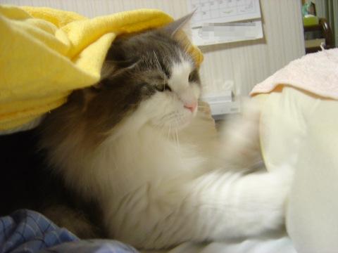フレイヤちゃんの気まぐれ04(2011.02.03)