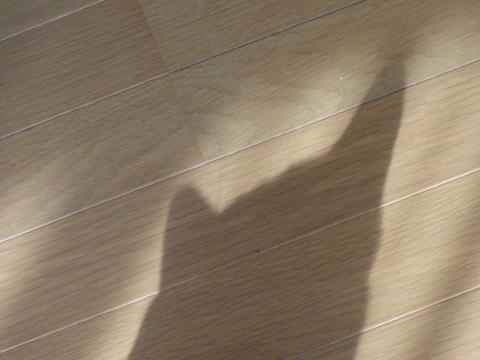 春の猫神様01(2011.02.04)