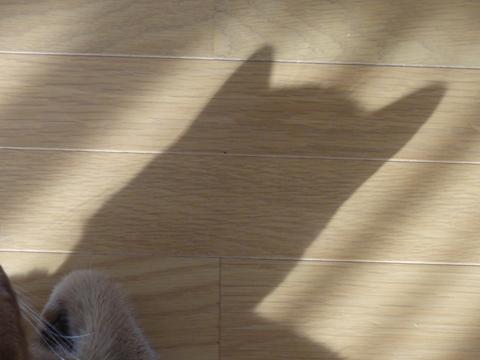 春の猫神様03(2011.02.04)