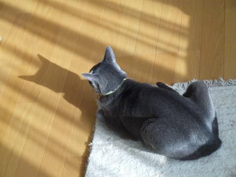 春の猫神様06(2011.02.04)