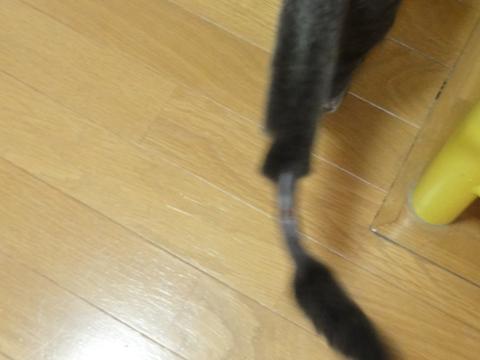 しっぽさんの予後02(2011.02.18)
