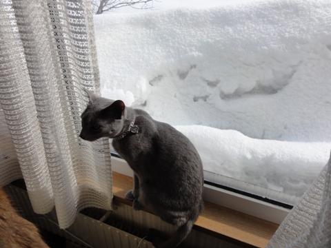 春待ち09(2011.02.26)