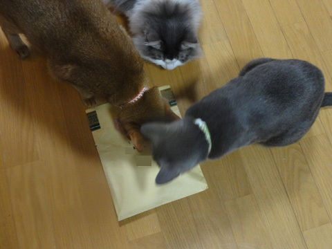 はやくはやくっ!01(2011.02.28)
