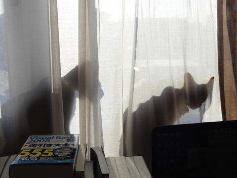 春待ち06(2011.02.28)