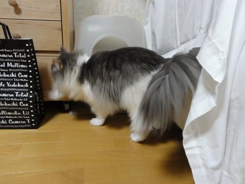 砂かけず姫03(2011.03.04)