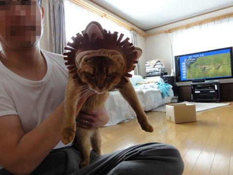 ライオン03(2011.03.21)
