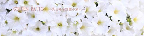 ギャラリー 花