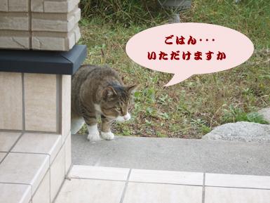 ブラッシング3 猫