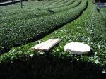 茶畑と割り箸と花台