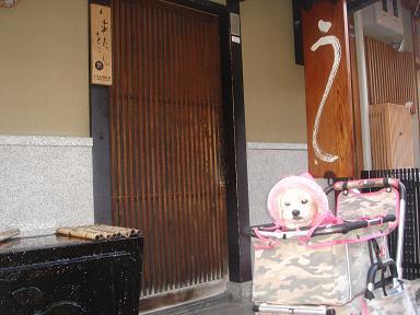 ごんちゃん 0161