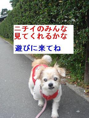 ごんちゃん 00312