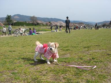 ごんちゃん 0288