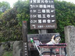ごんちゃん 0299