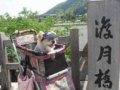 ごんちゃん 0411