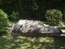 ごんちゃん 0241