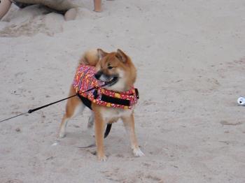 gon 砂浜でポーズ